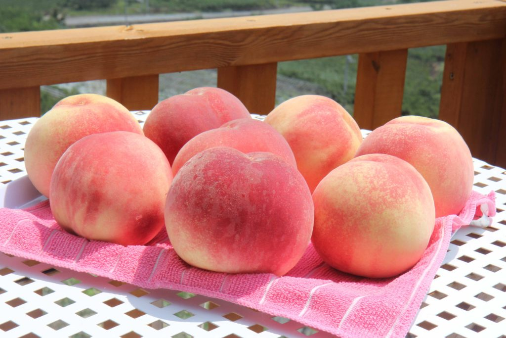 桃食べ放題